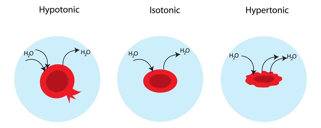 Hypotonic-vs-Isotonic